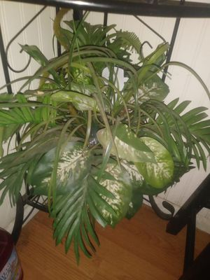 Fake plant for Sale in Laveen Village, AZ