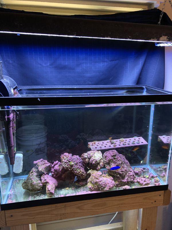Completes saltwater setup