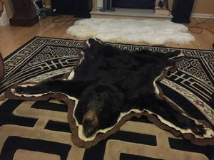 american black bear in exelent cond for Sale in Jackson, NJ