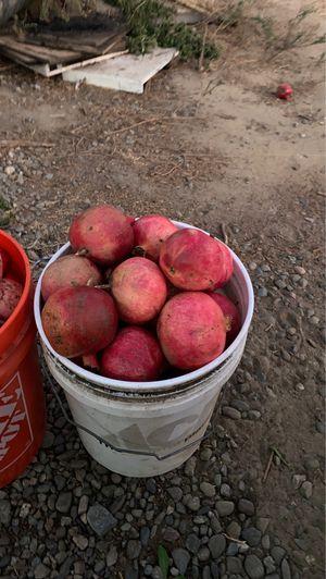 Pomegranates for Sale in Ceres, CA