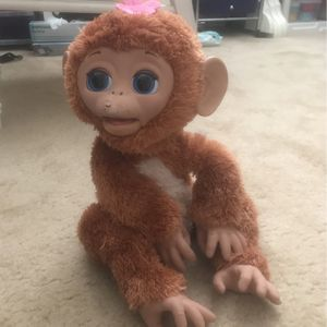 Monkey for Sale in Boca Raton, FL