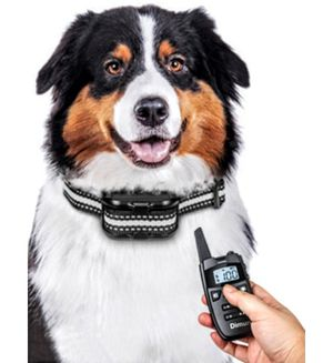 Dimunt Dog Training Collar with Remote for Sale in Brooklyn, NY