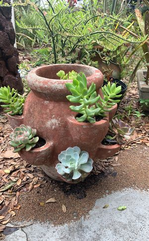 Strawberry planter with succulents for Sale in Belle Isle, FL