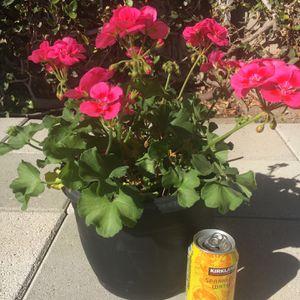 Flowering Plants for Sale in Fullerton, CA