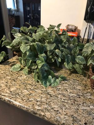 2 artificial plants for Sale in San Diego, CA