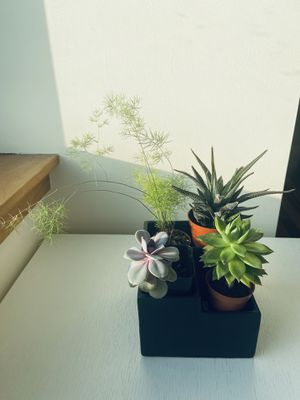 Succulent Plant - 4 different types - including pot for Sale in New York, NY