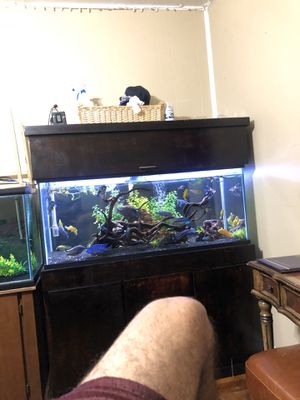 75 gallon tank for Sale in Fort Worth, TX