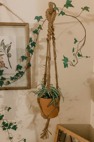 """Spider plant in a 4"""" clay pot with macrame plant holder for Sale in Peoria, AZ"""