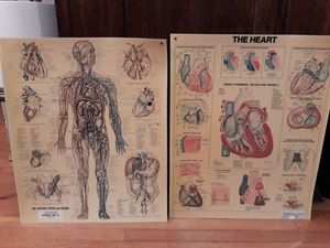 2x large anatomical medical charts. for Sale in Seattle, WA