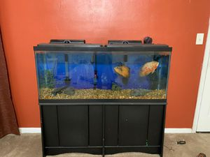 55 Gallon Fish Tank kit along with 2 Ocar Fish! for Sale in Chesapeake, VA