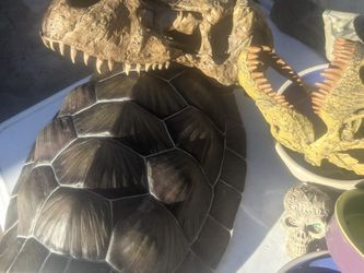 Reptile Supplies And More for Sale in Phoenix,  AZ
