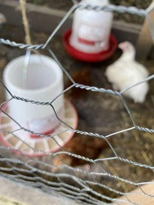 Fresh Eggs and Produce for Sale in Farmington Hills, MI