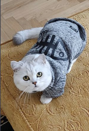 Soft cozy pet sweater (Shipping Only) size chart for Sale in San Leandro, CA