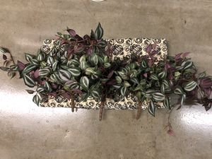 Set of 3- Realistic Fake Plants 🌿 for Sale in North Massapequa, NY