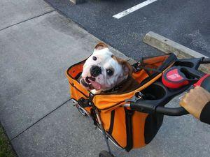 Dog stroller for Sale in North Port, FL