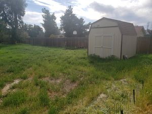 High grass in back yard. it will take maybe a hour to weed wack or cut with a mower. for Sale in Moreno Valley, CA