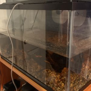 10 gallon fish tank for Sale in Wolcott, CT