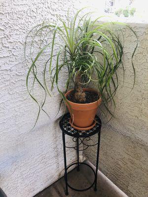 Live Indoor Plant in Ceramic Pot for Sale in Phoenix, AZ