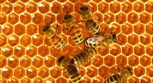 Natural honey for Sale in Poway, CA