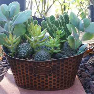 Beautiful assortment of cactus arrangements in a large tin box for Sale in Moreno Valley, CA