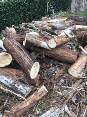 Free wood-dry and green poplar - about 5 cords of wood for Sale in Puyallup, WA