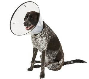 Recovery Dog Collar for Sale in Orlando, FL