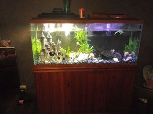 Fish tank for Sale in Union, KY