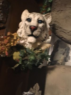 Lion, White tiger & Cheetah for Sale in Ada, OK