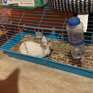 Rabbit & Cage For Sale for Sale in Fort Lauderdale, FL