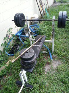 Weights and bench for Sale in Tampa, FL