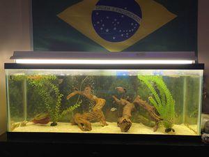 55 gallon fish tank for Sale in GREYSTONE PARK, NJ