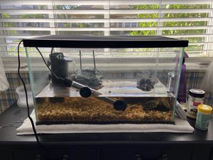 Yellow Belly Turtles for Sale in Lutz, FL