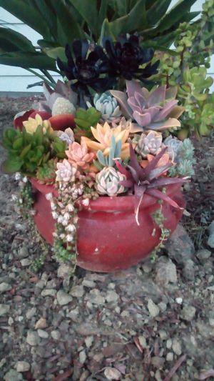 Succulent Arrangement for Sale in San Diego, CA
