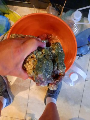 Live rocks for saltwater aquarium for Sale in Long Beach, CA