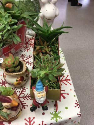 Succulent Xmas for Sale in Fresno, CA