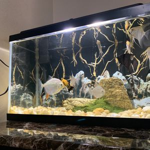 Aquarium With Fish And Accessoires for Sale in Los Angeles, CA