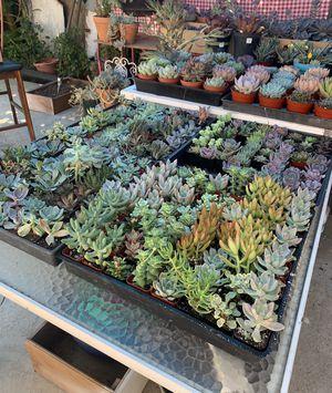 Succulents for Sale in La Puente, CA