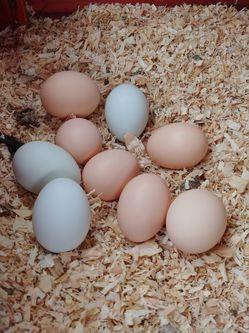 Fresh Chicken Eggs for Sale in Sacramento,  CA