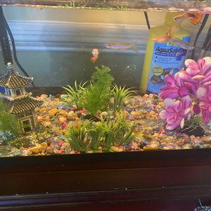 Fish Tank With Fish for Sale in Laurel, MD