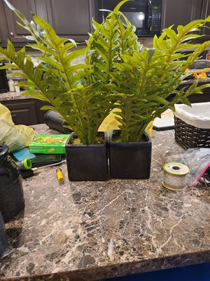 Aritifical plants for Sale in Cumberland, VA