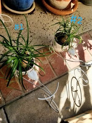 Bike planter and palm #1 $29 #2 $28 for Sale in Orange, CA