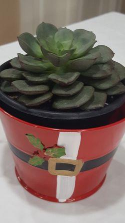 Houseplant/ Echeveria Succulent In Double Pot 5'H for Sale in Everett,  WA