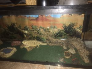 Bearded Dragon for Sale in Perris, CA