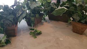 4 indoor silk plants for Sale in Clarksville, TN
