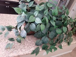4 decorative fake plants for Sale in Dinuba, CA