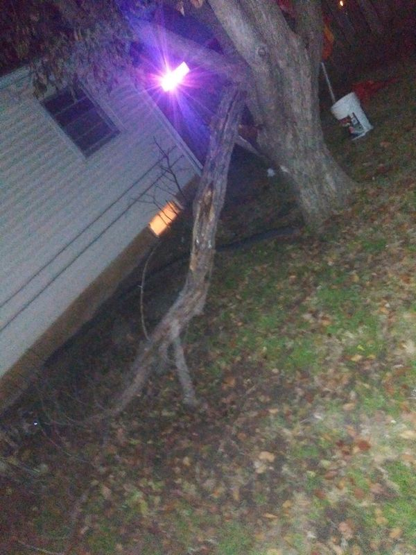 DIRT CHEAP DEAD TREE REMOVAL