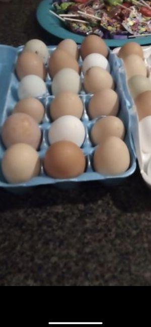 Huevos de gallina for Sale in Aurora, OR
