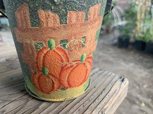 Organic Butternut Squash Seedling 🌱 In Decorative Tin for Sale in Montclair, CA