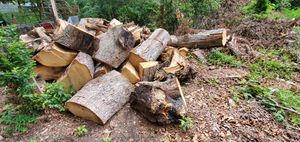 Free fire wood fresh cut tree for Sale in Colonial Heights, VA