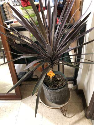 Plant for Sale in Nashville, TN
